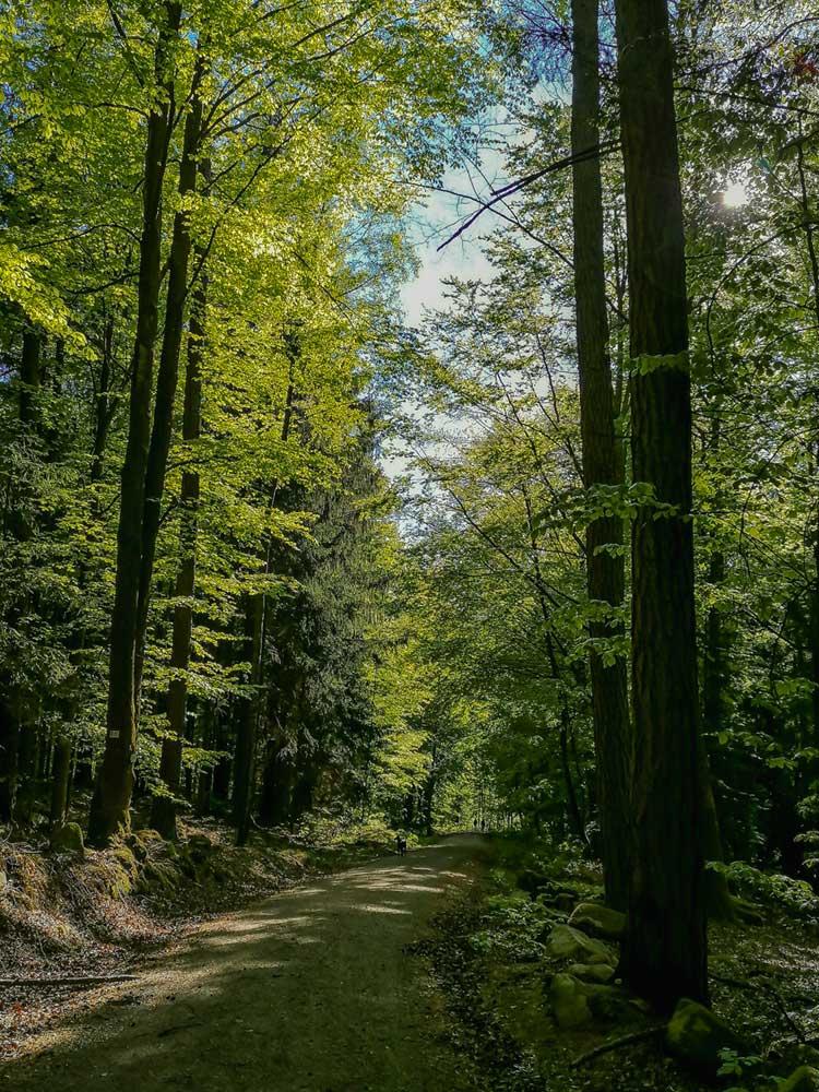 Waldweg mit Bäumen